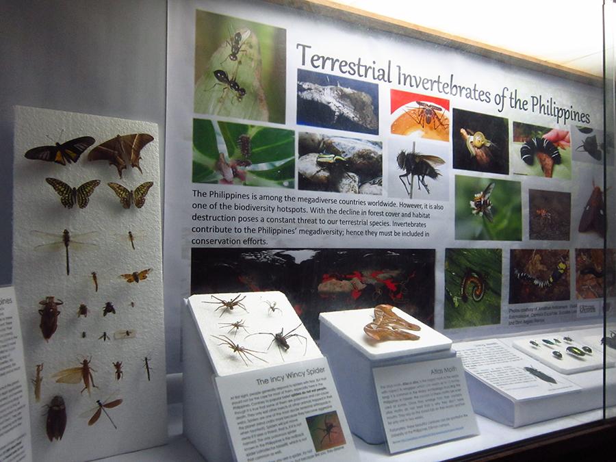 UP Biology Invertebrate Museum